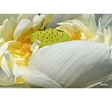 Lotus Photographic Print