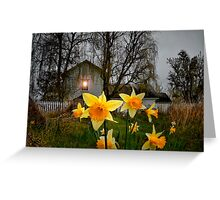 Daffodil's at Finley Refuge. Greeting Card