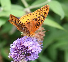 Summer Wings - Great Spangled Fritillary by WalnutHill