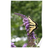 Summer Wings - Eastern Tiger Swallowtail Poster