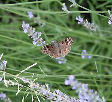 Summer Wings - Horace's Duskywing by WalnutHill