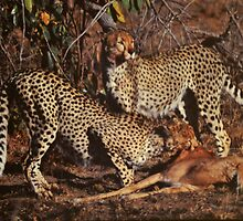 Cheetah Kill by Richard Shakenovsky