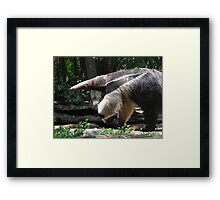 Lunch with an Anteater Framed Print