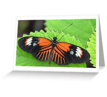 Butterfly on jagged leaf Greeting Card