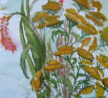 Tanzy and Crocosmia in a summer garden by kest standley