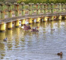 The Bridge. by Barbara  Glover