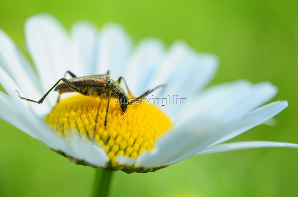 Pollinator by dwservingHim