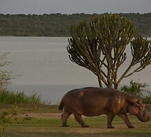 ugandan hippo lake by gruntpig