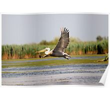 Flight of the Dalmatian Pelican Poster
