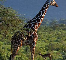 Stand Tall to the Right by Jennifer Sumpton
