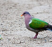 Green Dove by Hedoff