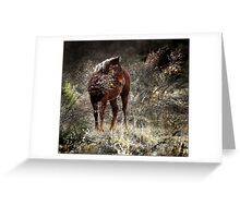 wild pony and shy Greeting Card