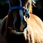 Hello Whiskers by myraj