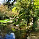 Reflections at Nicholas Gardens Victoria by Alison Murphy