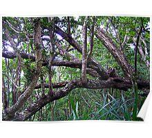 Rainforest, Margaret Knoll Poster