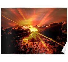 Sun rays © Poster