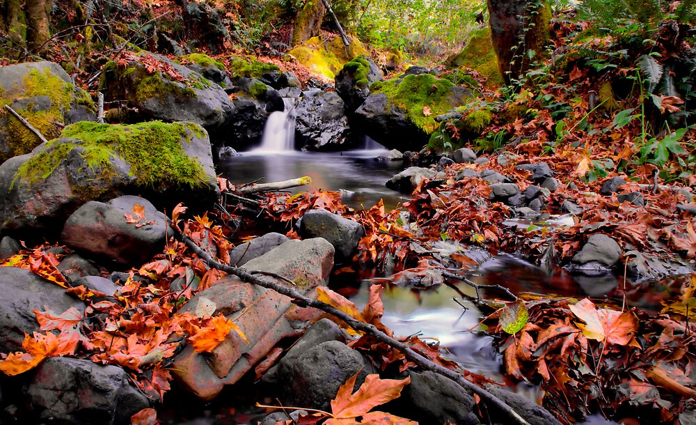 Calapooya River Fall Colors by Charles & Patricia   Harkins ~ Picture Oregon