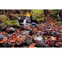 Calapooya River Fall Colors Photographic Print