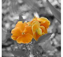 Splash of Orange Photographic Print
