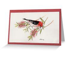 Scarlet Honeyeater on bottlebrush Greeting Card