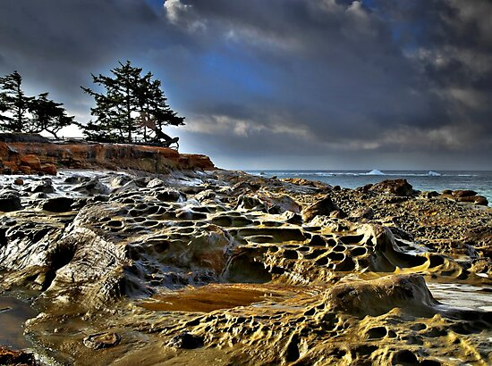 Cape Arago by Charles & Patricia   Harkins ~ Picture Oregon