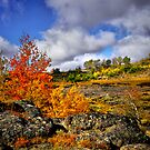 Fall in the Steens by Charles & Patricia   Harkins ~ Picture Oregon