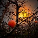 The Apple Glow by Charles &amp; Patricia   Harkins ~ Picture Oregon