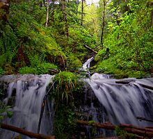 Fresh From The Hills by Charles & Patricia   Harkins ~ Picture Oregon