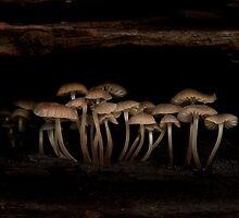 Fungi by shireshark