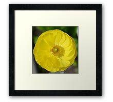 Pretty Yellow Flower Framed Print