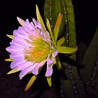 """Midnight Cactus Bloom""  by AlexandraZloto"