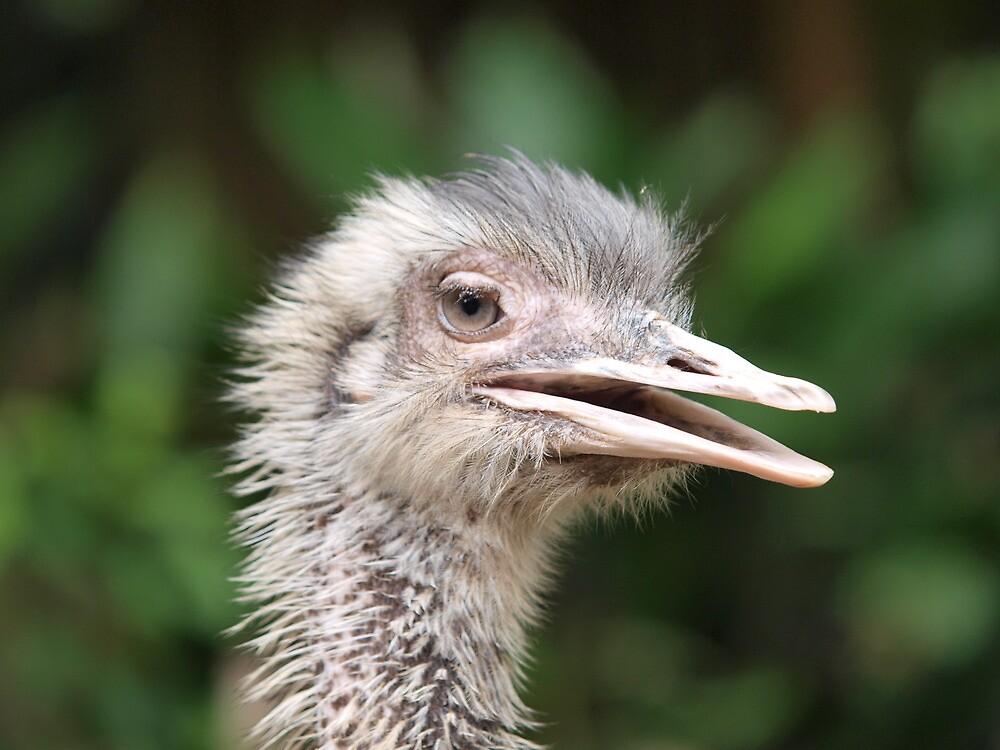 Ostrich saying Hi by shenlong