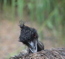 Emu peeking up by shenlong