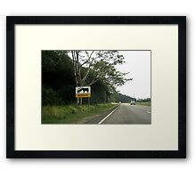 Even the cows are big in Far Nth Qld! Framed Print