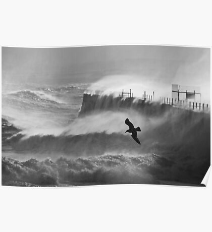 Storm Bird - Hartlepool Heugh Breakwater Poster