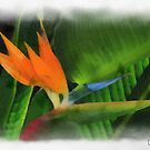 Bird of paradise.....  by DaveHrusecky