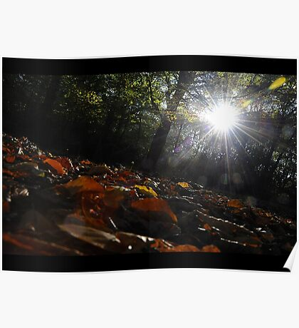 Dawn in the autumn forest Poster