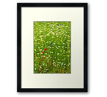 Ness Gardens, Meadow. uk. Framed Print