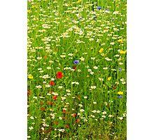 Ness Gardens, Meadow. uk. Photographic Print