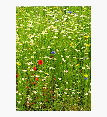 Ness Gardens, Meadow. uk. Photographic Print