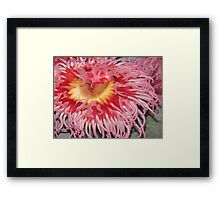 Anemone. Framed Print