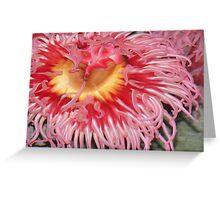 Anemone. Greeting Card