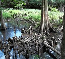 Cypress Knees  by ColourfulDaze