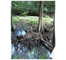 Cypress Knees  Poster