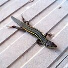 Lizard. by John  Smith