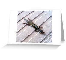 Lizard. Greeting Card