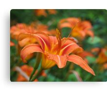 Daylilies - As-Is Canvas Print