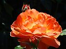 Colorful Orange Rose Flower art print Baslee Troutman by BasleeArtPrints