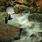 River Diversion by Barbara  Brown