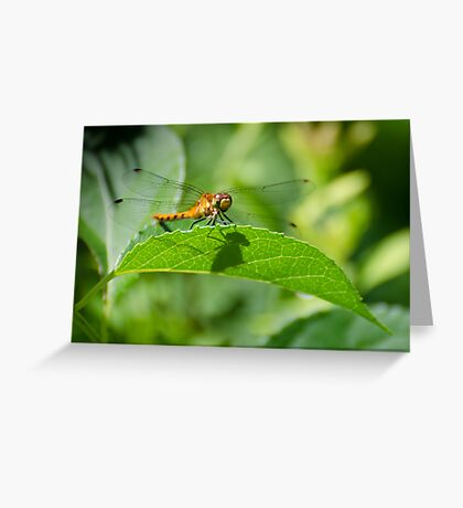 Happy Meadowhawk Greeting Card